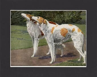 Russian Wolfhound Print 1919 Borzoi Dog Print by Louis Agassiz Fuertes Vintage Painting Print Mounted Borzoi Print Russian Wolf Hound