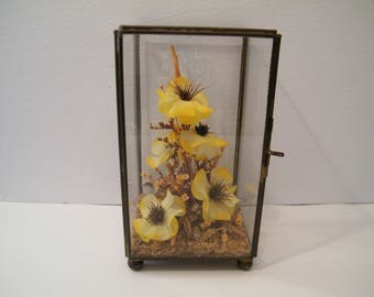 Glass And Brass Display With Hinged Door, Vintage Terrarium With Flower  Mounted, Yellow Blooms