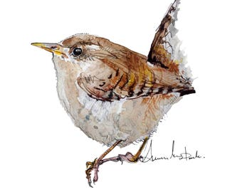 Wren, limited edition A4 gicleé print
