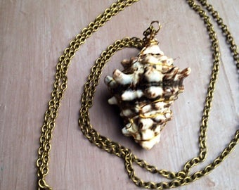 Sale boho necklace, shell necklace, natural jewelry, long necklace, boho chic necklace, tribal ethnic, uk shop, uk seller