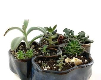 Succulent island Ceramic Planter