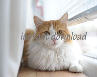 Instant Download Photo of Cat