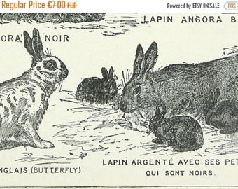 "Shop ""rabbits"" in Drawing & Illustration"