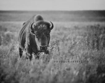 Bison art Buffalo print 8x10 Rustic Home Decor Fine Art Photography Bison art black and white photography cabin decor Large Bison art