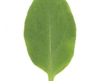 David's Garden Seeds Leafy Green Sorrel
