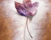 Leaf Print, Botanical Pri...