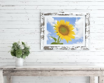 flower wall art, giclee print, sunflower wall art, nature photography, sunflower print, colourful wall art, home decor ideas, gifts for her