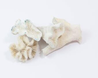 Collected, Beach, Coral Specimens, Nautical Decor