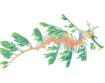 Leafy Seadragon watercolour print, sealife, seahorse wall art