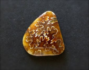 Fossil Ammonite Cabochon. Oak leaf ammonite. Amber color.