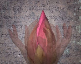 Lotus Bud Photo