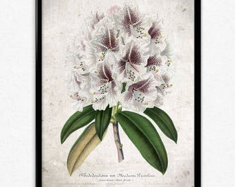 Purple and White Rhododendron Vintage Print - Flower Poster - Flower Art - Flower Picture - Home Decor - Home Art - Living Room - Wall Art