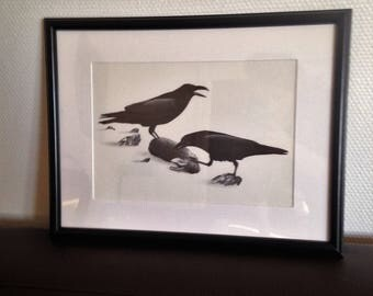 print the tawny - Ravens - Pierre MOED - 1970/80
