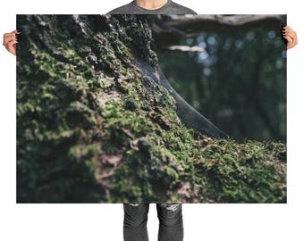 Beautiful Forest Mosses Poster