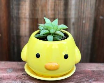 Cute ceramic CHICK succulent planter (PLANT INCLUDED) - Adorable animal planter