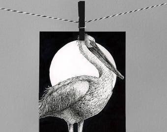 "Pelican 8x10"" drawing ART PRINT"