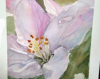 Apple Blossom Watercolor Print