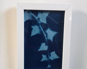 Cyanotype sunprint Ivy in white frame