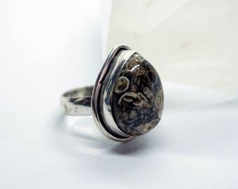 Chunky Turritella Agate Gemstone in Size 6.25
