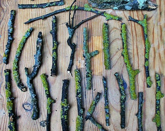 Twigs with lichen for faery furniture and houses, faery crown supply, flower arranging supply