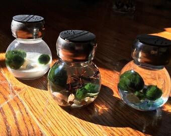 Spice it Up! Marimo Moss Ball Mini Spice Containers Terrarium Unique Kitchen Decor