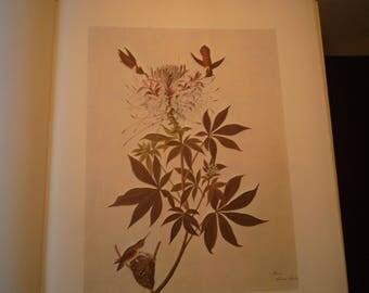 Rufous Hummingbird - Audubon Color Print from original 1850s painting - beautiful birds - gift for birders - nature lovers - western bird