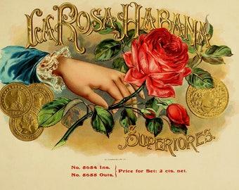 antique victorian cigar label la rosa habana illustration digital download