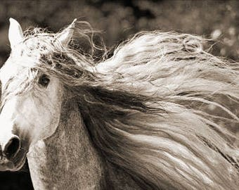Horse Print, Horse Photo, Sepia Horse Print, Fine Art Horse Photography Modern Farmhouse Decor Farmhouse Wall Art Horse Photograph