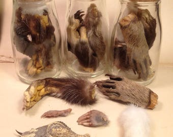 Collection of Six Different Professionally Dry Preserved Animal Paws/Feet in Glass Corked Jar