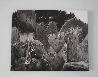Cactus Print / Cactus Art Photography Canvas / Black and White Nature Print / Ready to Hang
