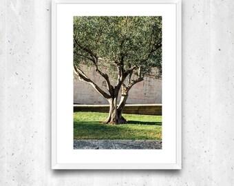 Olive tree, Provence, France – Fine Art Print