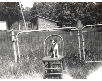 "Vintage Snapshot ""Good Dog!"" Sweet Little Puppy Poses On Wooden Chair Rural America Found Vernacular Photo"
