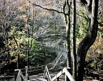 Stairway to Autumn - Fall Forest Woodland Nature Landscape Photography Print Outdoors Rustic Home Decor Wall Art