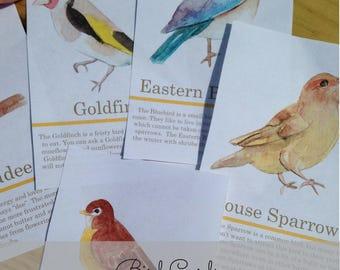 Montessori Backyard Bird Exploration Cards for Nature Study