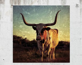 Sunset Longhorn - Animal, Country, Western, Rustic, Photography - Buda, TX - Fine Art Print - Canvas Gallery Wrap - Metal Print