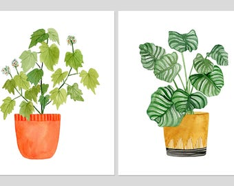 "Two Print Set: ""Sparmannia Africana"" & ""Calathea Ornata"" Archival Prints by Lindsay Gardner"