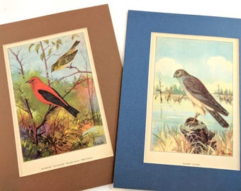 2 matted reversible bird prints, Scarlet Tanager & Marsh Hawk, 1926, R.E. Todhunter, 8x10