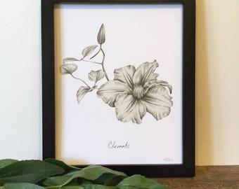 Clematis print
