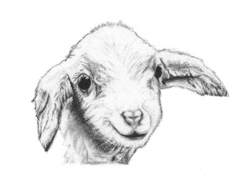 ORIGINAL ARTWORK A4 Print Charcoal Drawing of a Lamb by Animal Artist Elena Pimentel