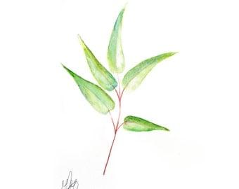 Gorgeous Delicate Botanical Watercolour 7x5 Print