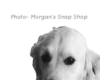 """B&W """"Magee the dog"""" ~ digital download"""