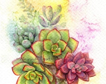 PRINT – Sweet succulent Watercolor painting 7.5 x 11""