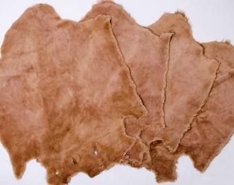 Sheared Beaver pelt/ Natural Beaver Pelt/ Genuine Beaver Skin/ Natural Beaver Fur