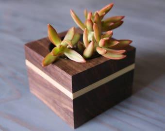 Wood Succulent Holder - Walnut