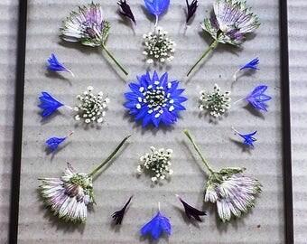 Pressed Flower Art: 'Cornflowers'. Hand-made, unique pressed flower picture.