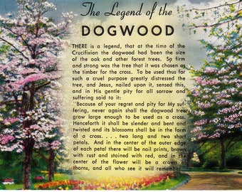 The Legend of the Dogwood Vintage Postcard Unused Divided Back 1950's Collectible