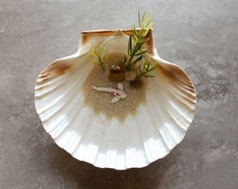 Miniature Koi Pond in Seashell / Terrarium / Fairy Garden Accessory / Tropical Home Decor