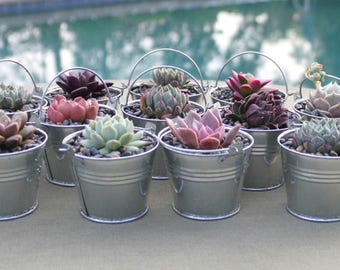 20 Succulent Favors in Galvanized Steel Pails, Wedding Favors, Succulent Wedding Favors, Wedding Succulent Favors, Succulents, Succulent
