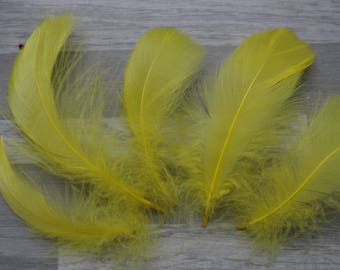 Set of 50 yellow chick goose feathers