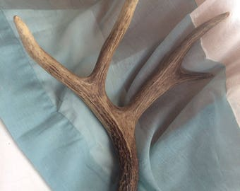 Naturally Shed Mule Deer Antler, Four Point